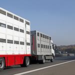 transport zwierzat